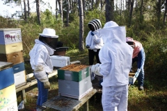 Inspecting a hive